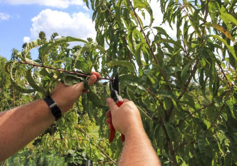 Agenda del jard n de abril garden catalunya plants sant for Arboles frondosos para jardin