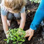Agenda del jardín de mayo