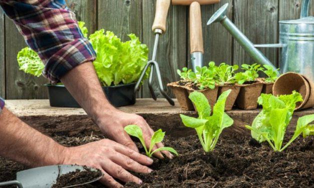 Curso «El jardín-huerto ecológico» (25 de mayo de 2019)