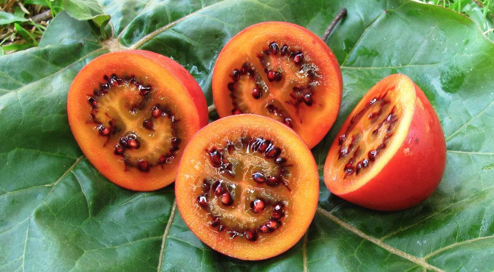 El Tamarillo – Árbol de los tomates