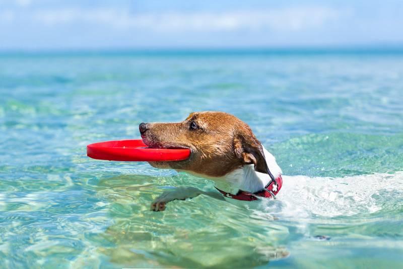 Cómo mantener fresco a tu perro este verano