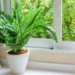 Sistemas para regar tus plantas en vacaciones