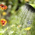 Agenda del jardín de agosto