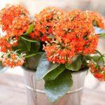 6 plantas de interior que toleran los descuidos
