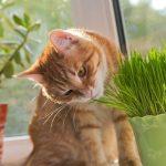 Qué plantas cultivar si tienes gatos en casa