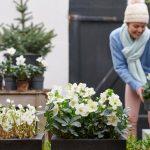 Agenda del jardín de diciembre