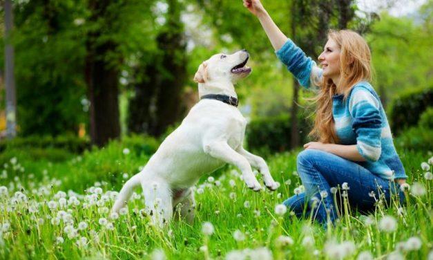 Cómo premiar a tu perro de manera efectiva