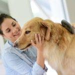 Consejos para que tu perro tenga un pelo sano y espectacular