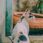 Gatos: cómo tratar sus problemas de salud más habituales