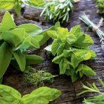 5 plantas que no han de faltar en tu jardín