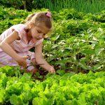 Planta del mes de FEBRERO: PLANTEL DE HORTALIZA con un 15% de descuento