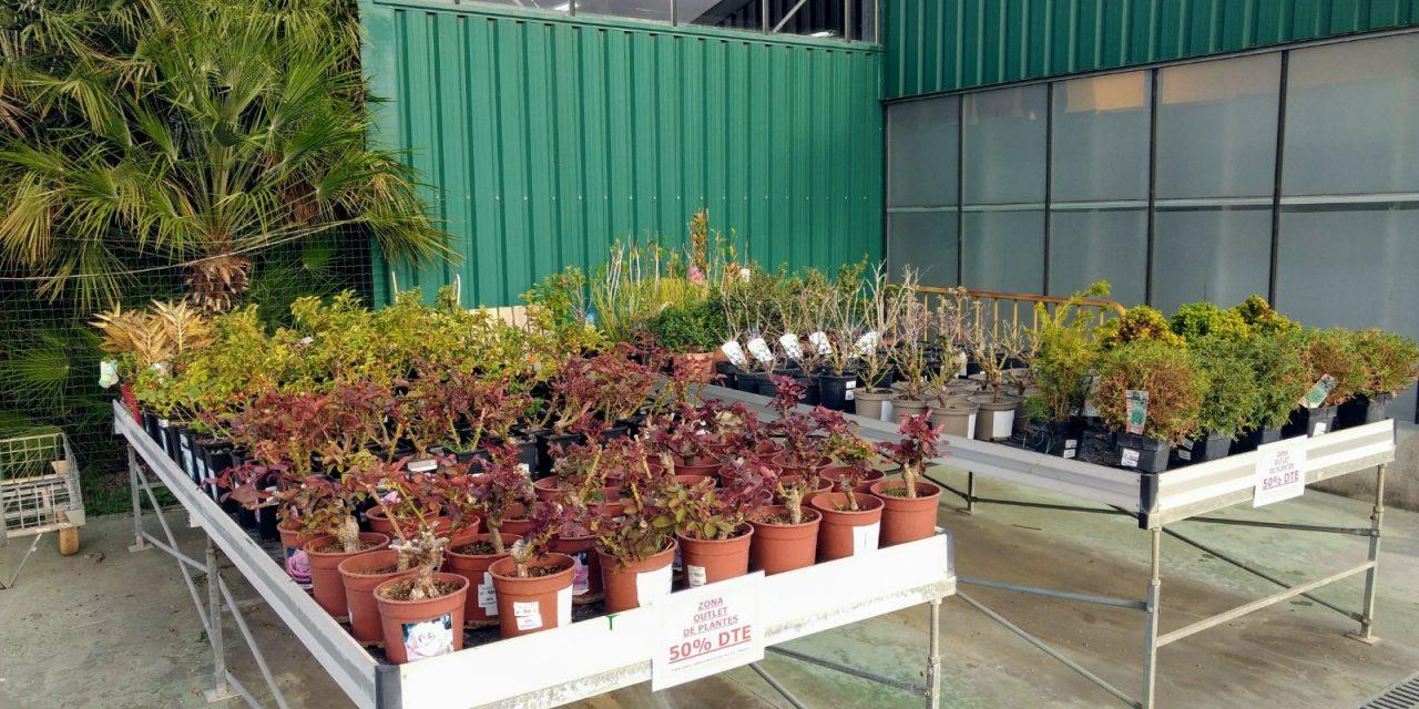Nueva Zona Outlet de Plantas en Catalunya Plants