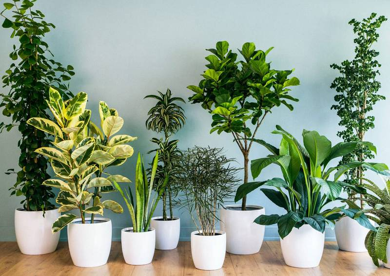 cuidados de las plantas de interior en octubre