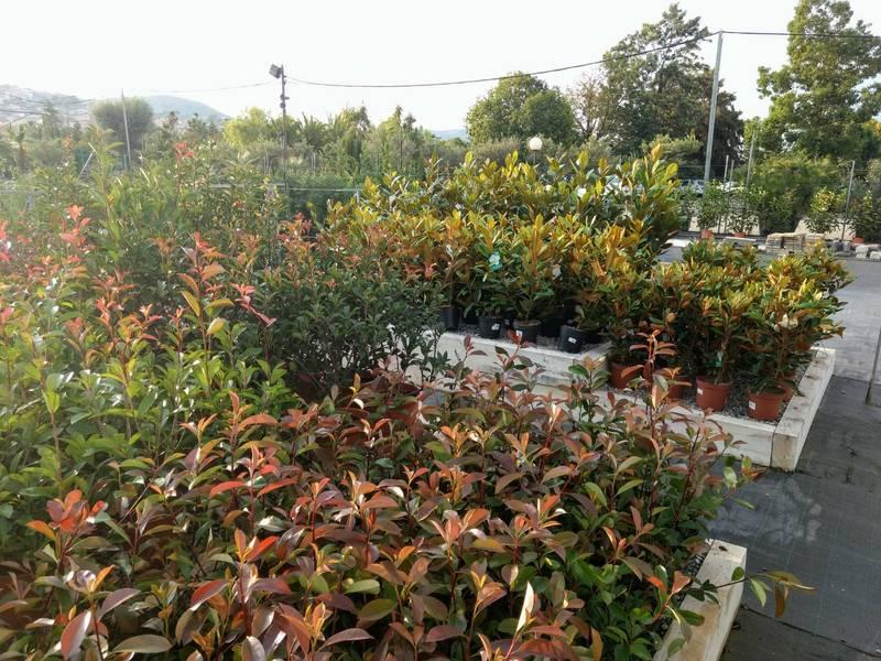 Cuidado de árboles y arbustos en octubre