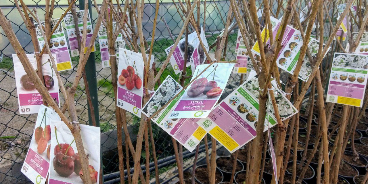 Llega el frío: Empieza la temporada de plantación de los árboles frutales