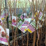 Llega el frío: Empieza la temporada de plantación de los árboles frutales.