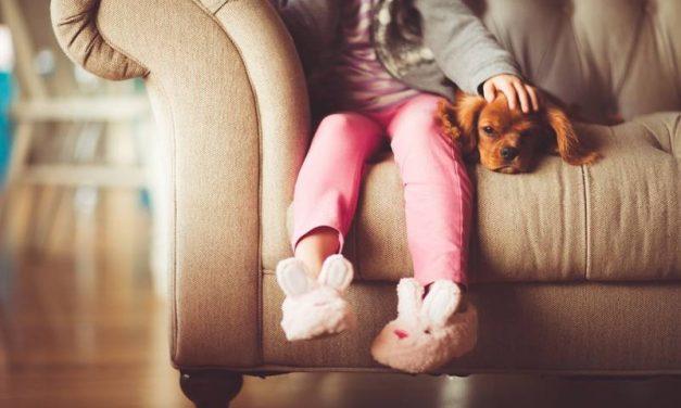 Cómo preparar la llegada de un cachorro