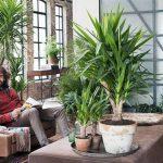 Yucas: un verde toque 'tex-mex'
