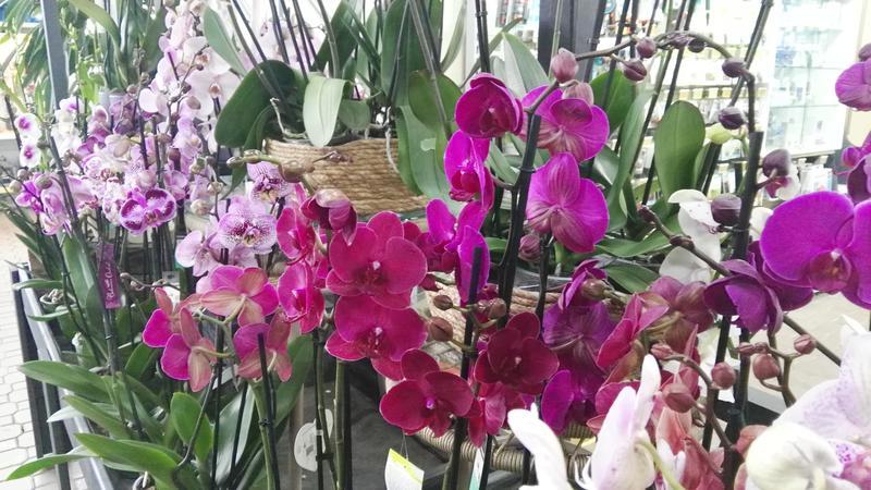 Comprar orquídeas en Barcelona