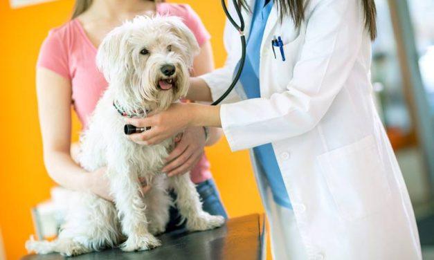 ¿Cada cuánto debe ir el perro o gato al veterinario?