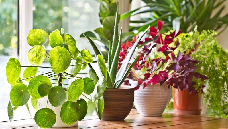 Plantas de interior: cuidados básicos en Abril