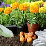 Bulbos de verano: ¡plántalos en primavera!