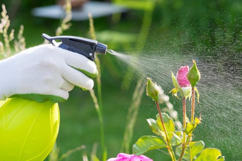 Cuida tus plantas de las plagas esta primavera