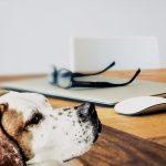 Perros: ¿Qué hacer con ellos durante el confinamiento?