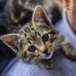 ¿Qué hago con mi gato durante el confinamiento por COVID-19?