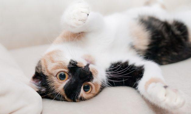 Consejos para que tu gato no arañe los muebles