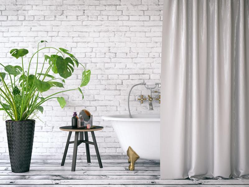 Plantas ideales para el baño