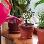 Cómo regar las plantas en primavera