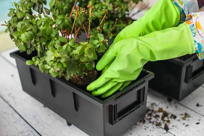 Cómo transplantar y abonar las plantas en primavera