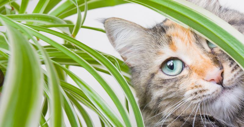 Plantas beneficiosas, repelentes, excitantes y tóxicas para los gatos