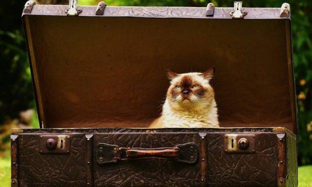 Perros, gatos y vacaciones