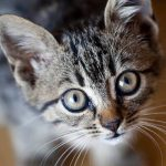 Interacción de las personas mayores y niños con los gatos