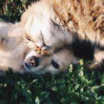 Causas y tratamiento de la caída de pelo en gatos y perros