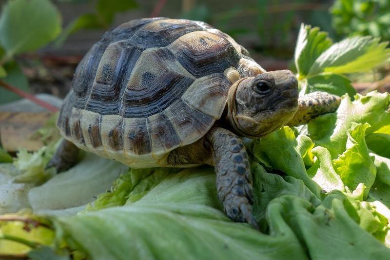 Tortugas: mascotas ideales para los niños