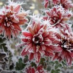 Plantas a salvo del viento, el frío y la nieve