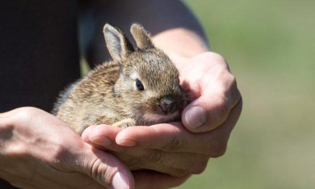 Enfermedades más comunes en conejos y sus síntomas