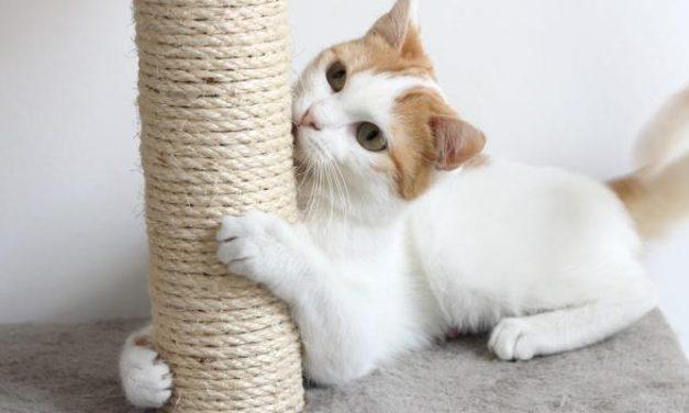 Beneficios de los rascadores para  gatos