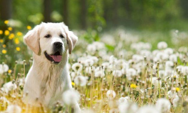 Cómo tratar las alergias de nuestra mascota