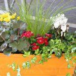Jardineras combinadas: el arte de mezclar especies