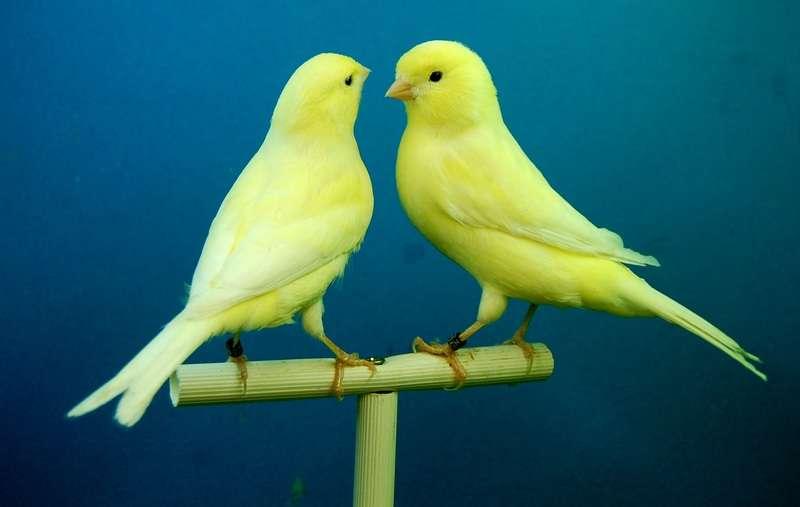 Cómo saber si un pájaro es feliz