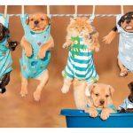 Descárgate nuestro catálogo de Mascotas